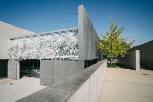 Installation view: Hedge