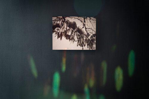 <em>Margaret Keller: Botanica absentia</em>, installation view, Contemporary Art Museum St. Louis, September 6–December 29, 2019. Photo: Dusty Kessler.